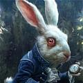 하얀 토끼
